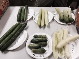 きゅうり展示2.JPG
