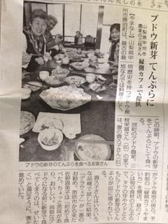 ぶどうの新芽の記事.JPG