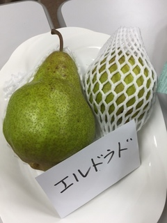 エルドラド.JPG