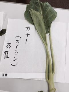 カナー(カイラン).JPG