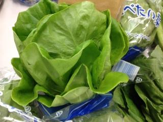 サラダ菜.JPG