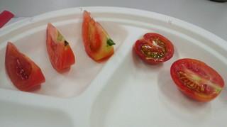 トマト 食べ比べ.jpg