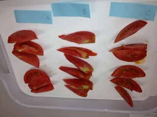 トマト食べ比べ.JPG