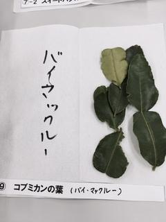 バイマックル.JPG