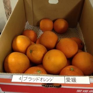 ブラッドオレンジ.jpeg