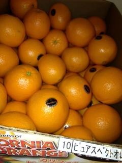 プピュアスペクトオレンジ.JPG