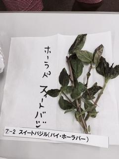 ホラーパ スィートバジル.JPG