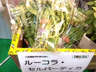 ルーコラセルバーティカ トキタ.JPG