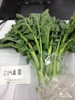 三河島菜.JPG