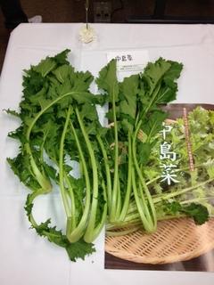 中島菜.JPG