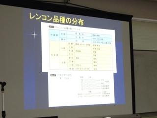 品種レンコン.JPG