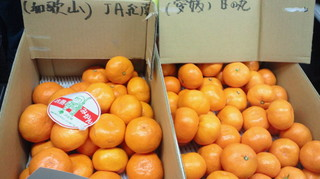 左和歌山紀南 右愛媛 日の丸.jpg