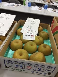市川 幸水.JPG
