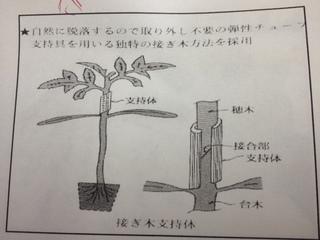 接木方法.JPG