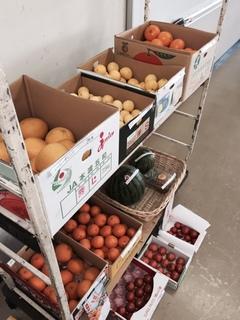 果物展示.JPG