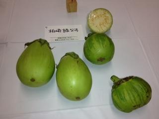 柏崎緑なす.JPG