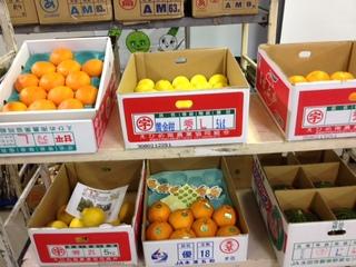 柑橘他 展示.JPG