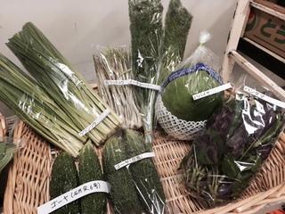 沖縄野菜 展示.JPG