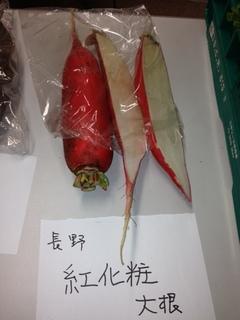 紅化粧大根 長野.JPG