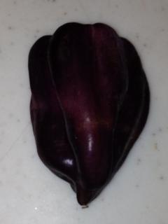 紫ピーマン2.JPG