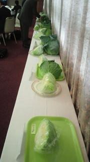 野菜と文化のフォーラム きゃべつ展示2.jpg
