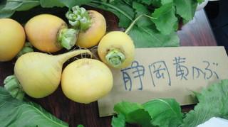静岡の黄かぶ.jpg