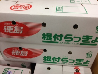 _らっきょう徳島DB.JPG
